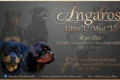 Zapowiedź miotu w hodowli Angaros