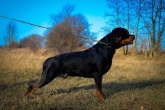 BLACK HUNTER Cordis rottweiler reproduktor