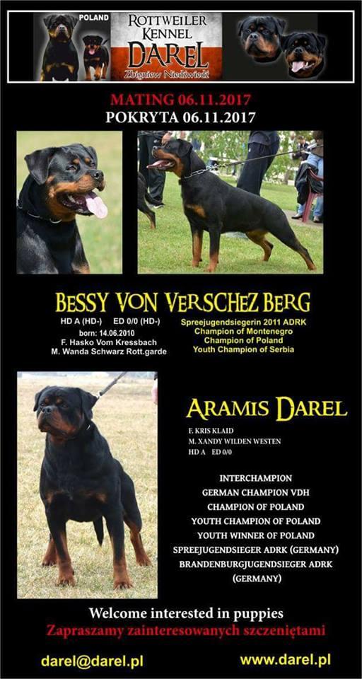 Bessi x Aramis Darel miot rottweiler
