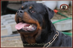 GRAAL Nice And Lovely FCI rottweiler reproduktor