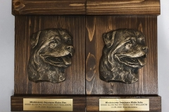 Młodzieżowy Zwycięzca Klubu Pies i Suka1