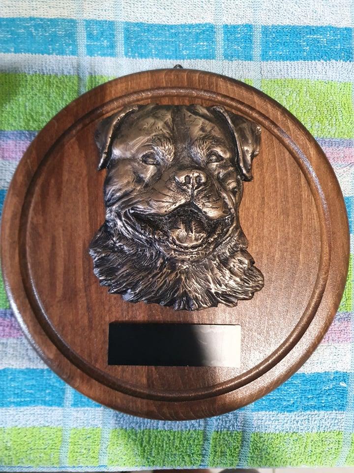 Dla Zwycięzców Klubu (Pies i Suka) oraz dla Najlepszego Juniora i Weterana