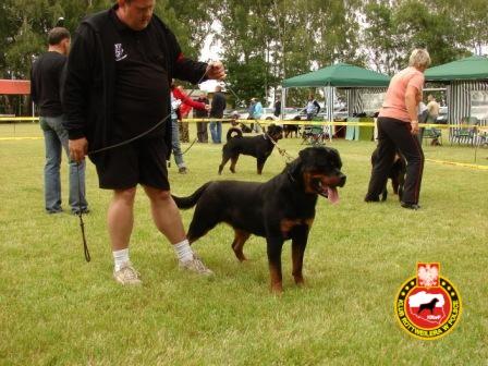 DSC09765_zwyc_mlodz_klub_pies