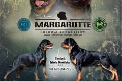 Margarotte rottweiler zapowiedź miotu
