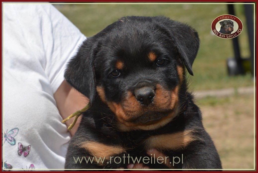 Major Black Allusion Ria von Haus Zizakov litter