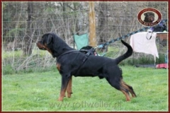 PIERRO Nice and Lovely rottweiler reproduktor