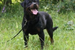 UQUAR Nice And Lovely rottweiler reproduktor